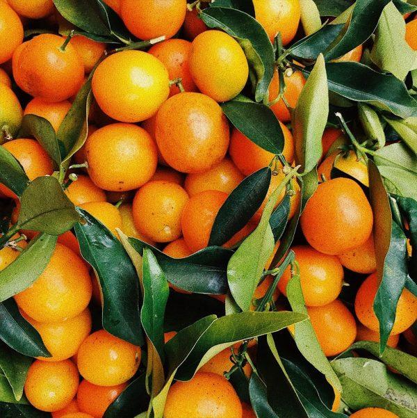 Organic Sweet Orange